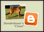 BOXER Cross Blogger