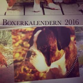 korad-bols-bonnie-prince-mittuppslaget-pa-boxerkalendern-2016