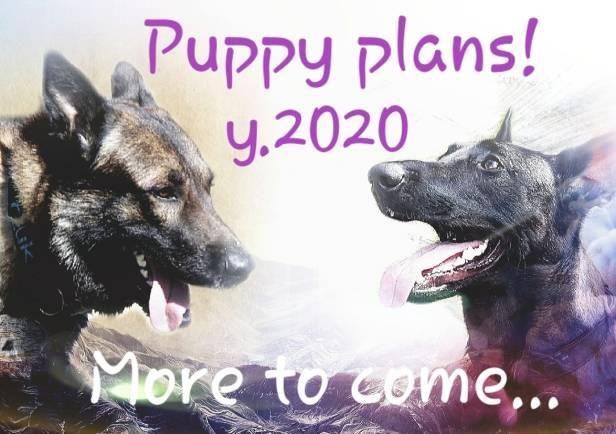 puppy plans 2020