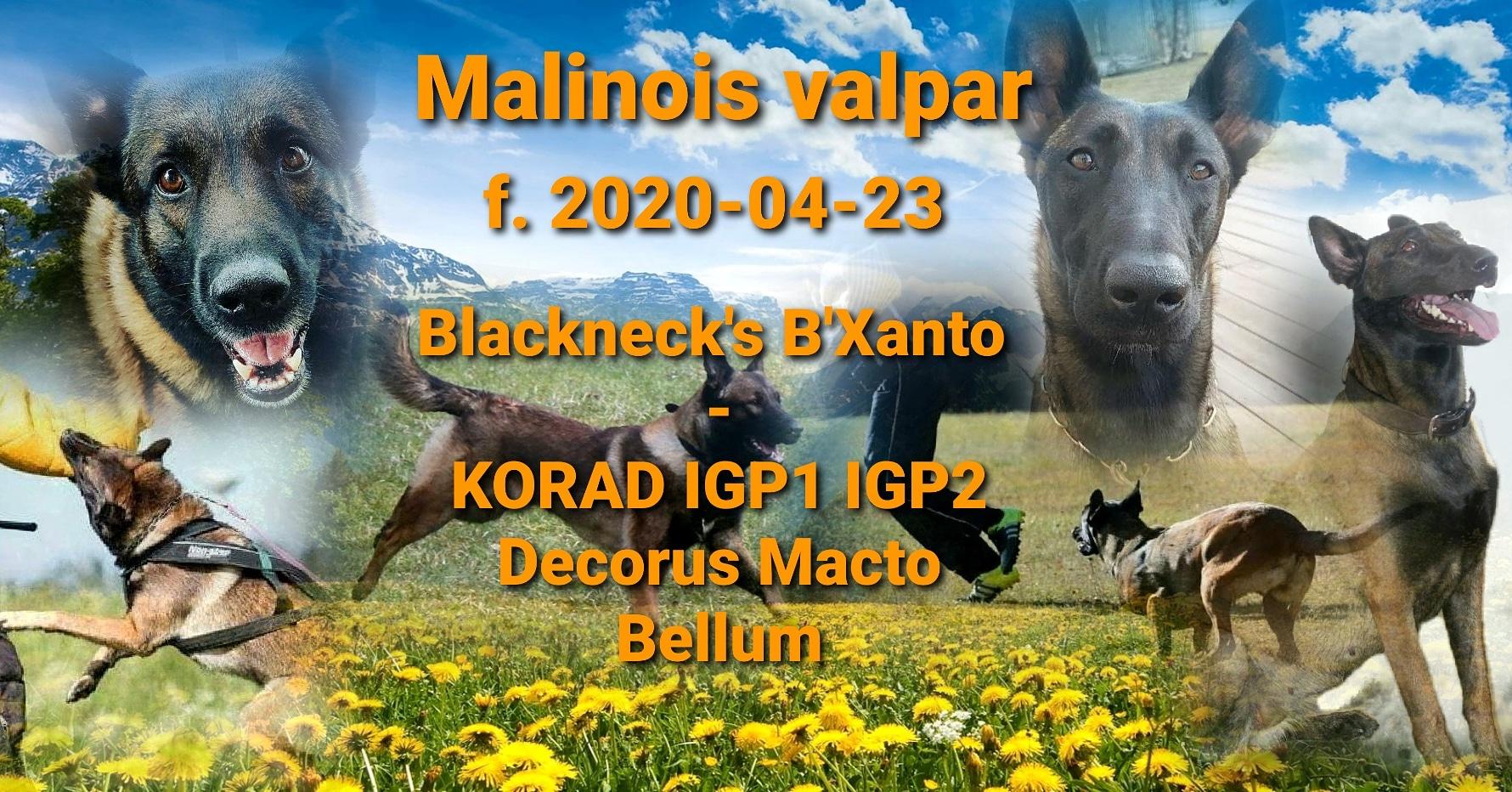 IMG_20200501_001346_672.jpg